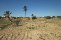 un grand terrain titré à guecheine Djerba pas cher