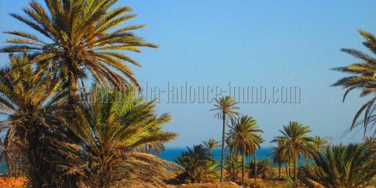 Terrains avec et sans titre à vendre à Djerba Midoun Arkou et Aghir